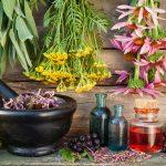 Dom za stare Beograd - Homeopatski vrt